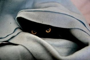 cat-kitty-katze-black-hiding-blanket-eyes-staring-hunter-lurk-watch-ambush-waiting