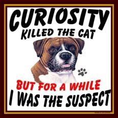 CuriosityKilledTheCat-12234